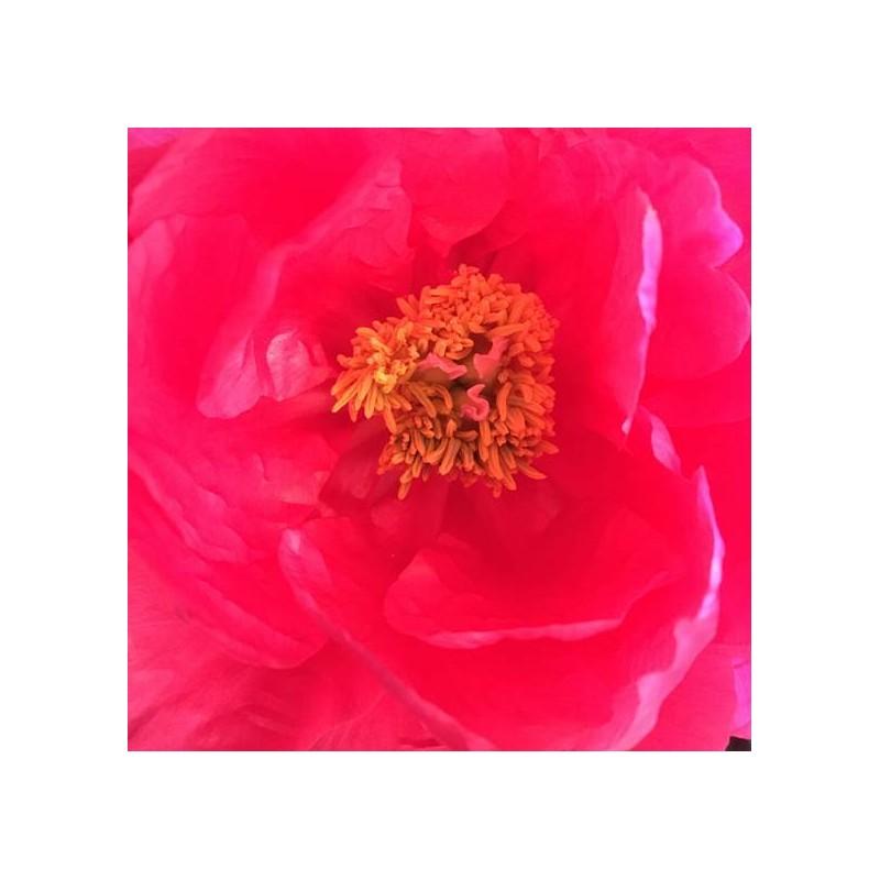 Plonger le nez dans une fleur