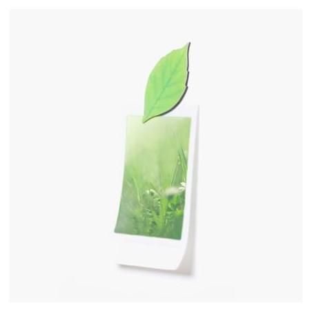 Leaf Magnet Hêtre