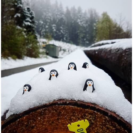 Aimants Pingouins