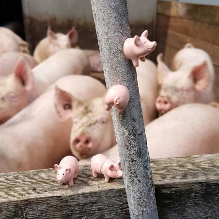Aimant Piggy
